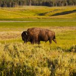 The Top 10 Most-Visited National Parks
