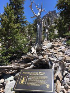 Donald Liss: Great Basin